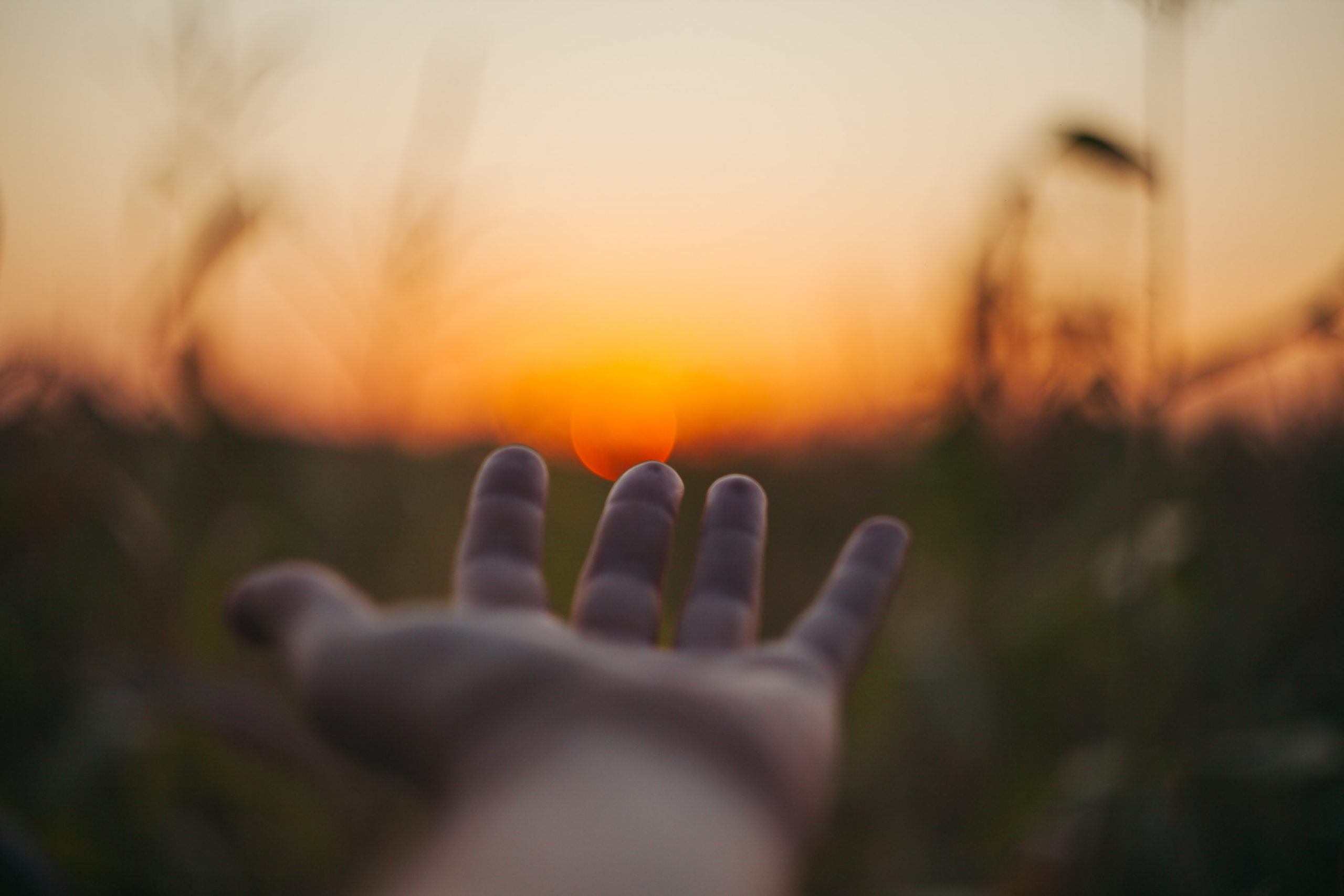 Hand in grass at sunset